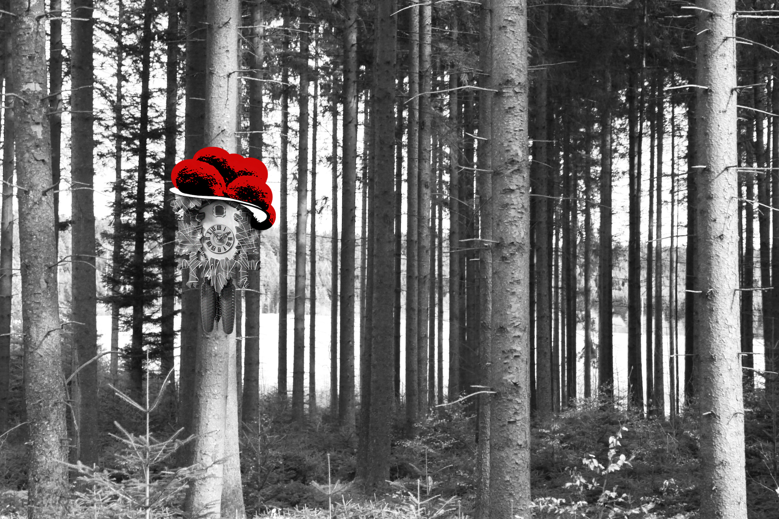 Kuckuck im Wald (quer)