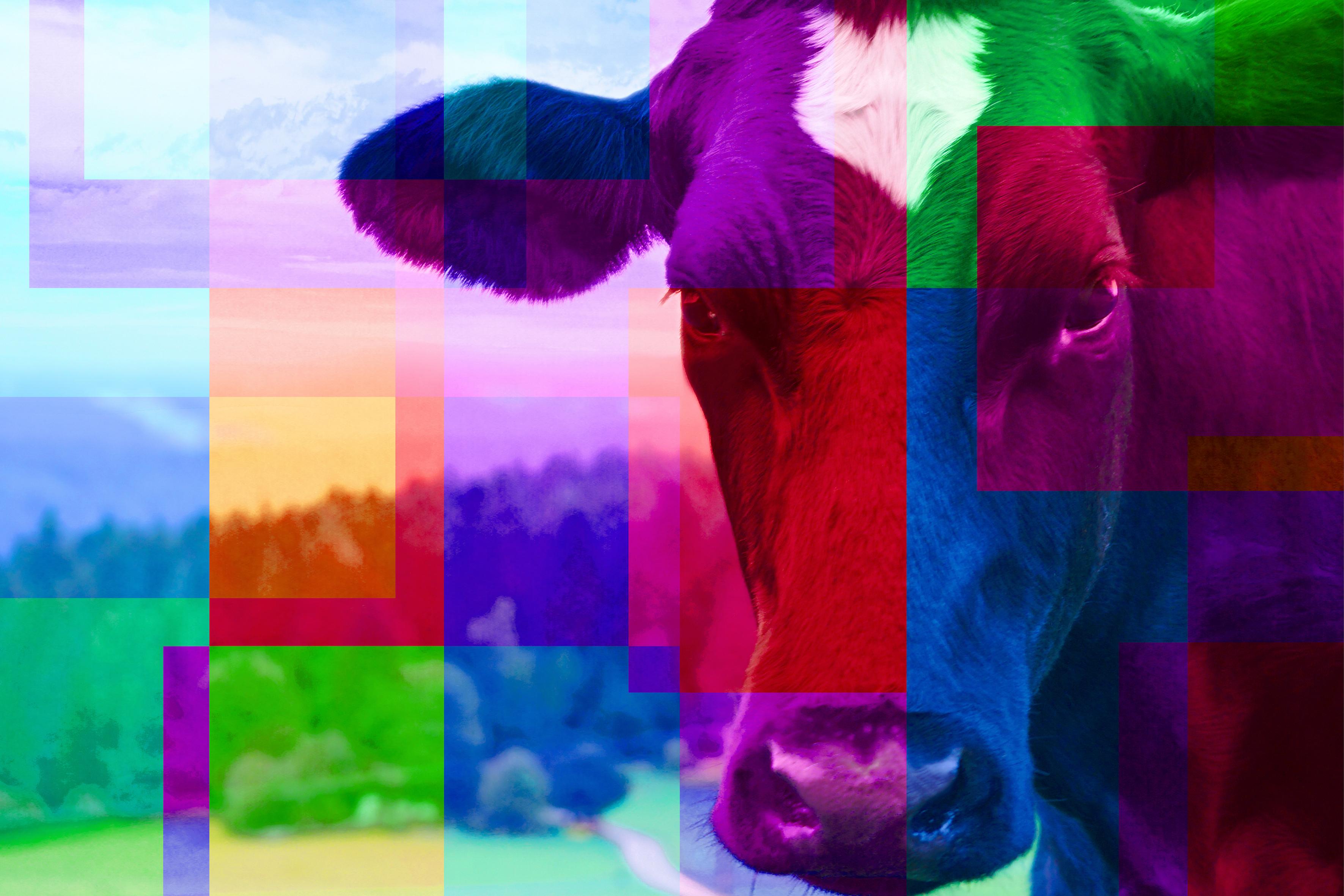 Die bunte Kuh
